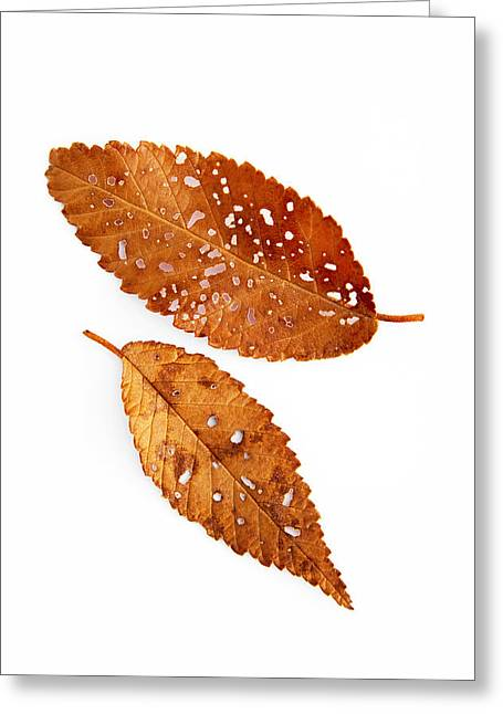 Fallen Leaf Greeting Cards - Leaf Montage No. 3 Greeting Card by The Forests Edge Photography - Diane Sandoval