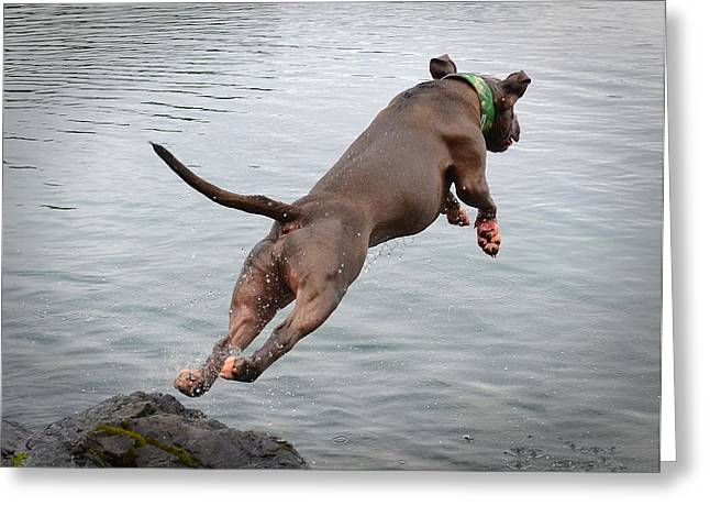 Diving Dog Greeting Cards - Learning to Fly Greeting Card by Deanna Maxwell