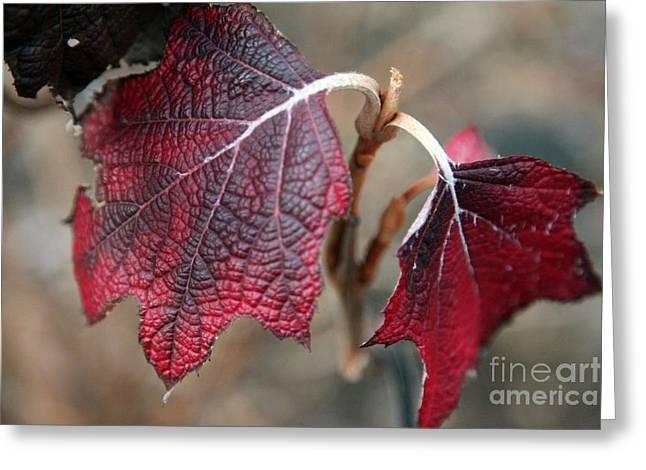 Autumn Prints Digital Art Greeting Cards - Leaves Greeting Card by Amanda Barcon