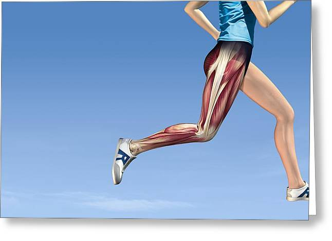 Jogging Greeting Cards - Leg Muscles In Running, Artwork Greeting Card by Henning Dalhoff