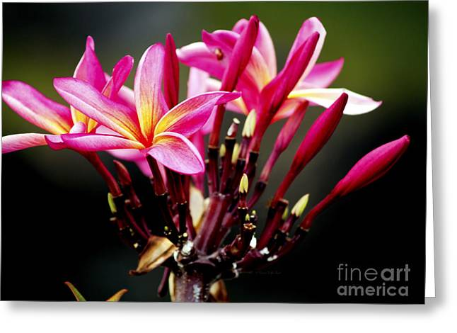 Flower Blossom Greeting Cards - Leilani Greeting Card by Patricia Griffin Brett