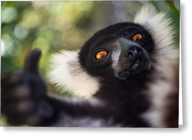 Lemur Expresion Greeting Card by Hein Welman