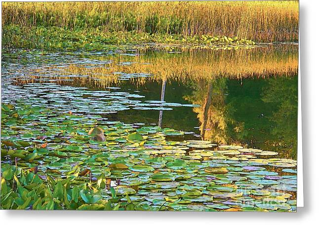 Rural Indiana Greeting Cards - Lily Pads on the Lake Greeting Card by Joyce Kimble Smith