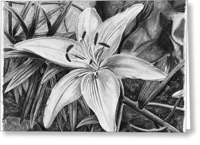 Susan Schmitz Greeting Cards - Lily Greeting Card by Susan Schmitz