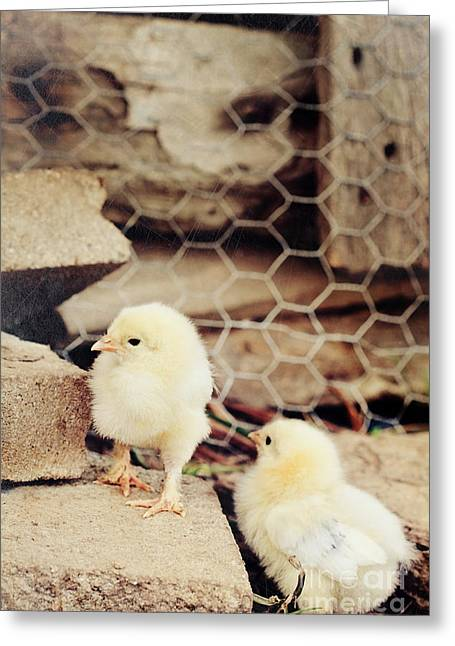Fluffy Chickens Greeting Cards - Little Explorers Greeting Card by Stephanie Frey