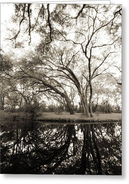 Moss Greeting Cards - Live Oak Reflections Greeting Card by Dustin K Ryan