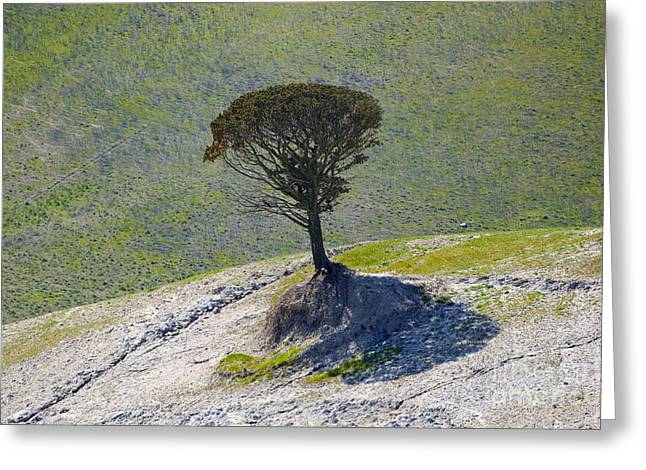 Branch Hill Greeting Cards - Lonely tree Greeting Card by Mats Silvan