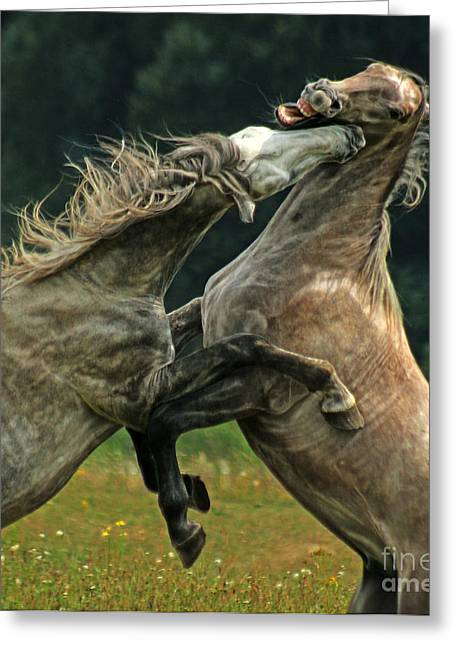 Sparring Greeting Cards - Love Bite Greeting Card by Angel  Tarantella