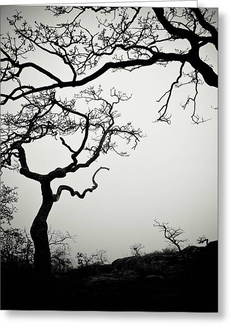 Scarey Greeting Cards - Low Angle View Of Eerie Tree Silhouettes Greeting Card by Helene Cyr