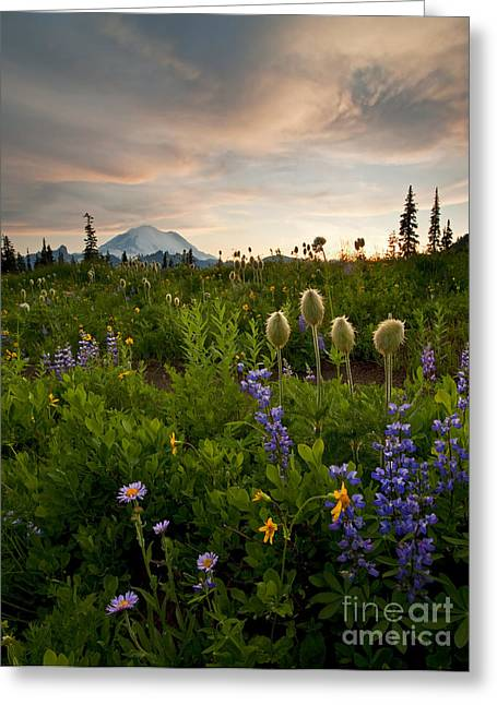 Anenome Greeting Cards - Lupine Sunset Greeting Card by Mike  Dawson