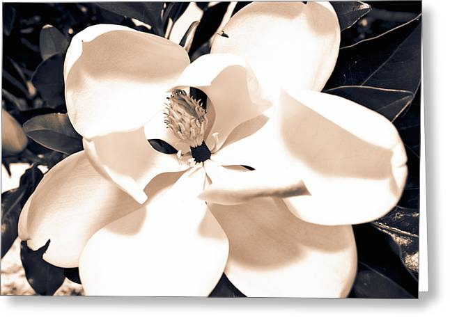 Duo Tone Greeting Cards - Magnolia Greeting Card by Clinton Lundberg