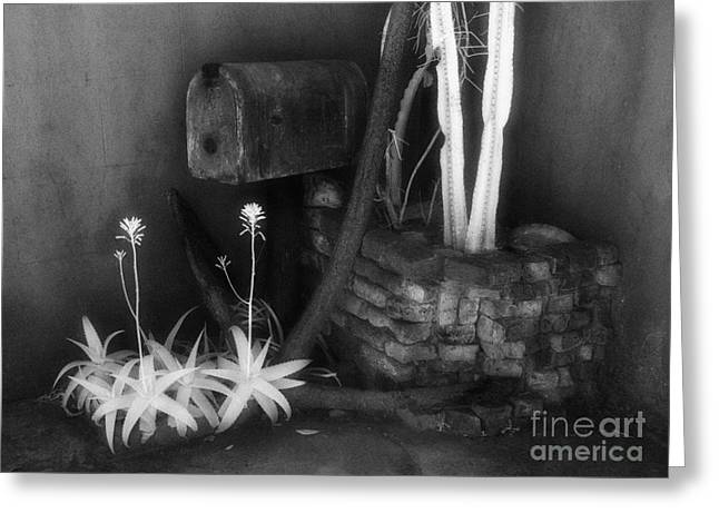 Jeff Holbrook Greeting Cards - Mailbox and Cactus Greeting Card by Jeff Holbrook