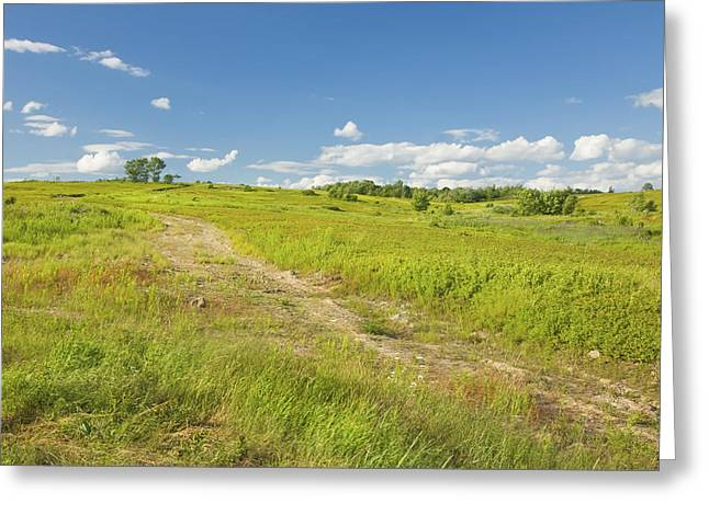 Field. Cloud Greeting Cards - Maine Blueberry Field In Summer Greeting Card by Keith Webber Jr