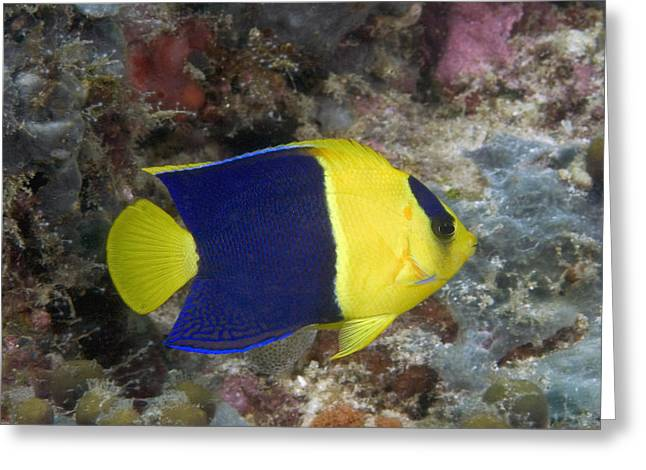 Reef Photos Greeting Cards - Malaysia Marine Life Greeting Card by Dave Fleetham - Printscapes