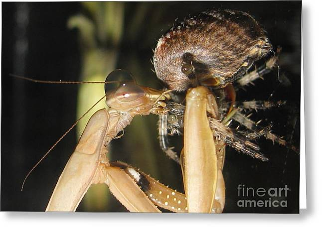 Paralyzed Greeting Cards - Mantis Vs Spider Greeting Card by Tina Marie