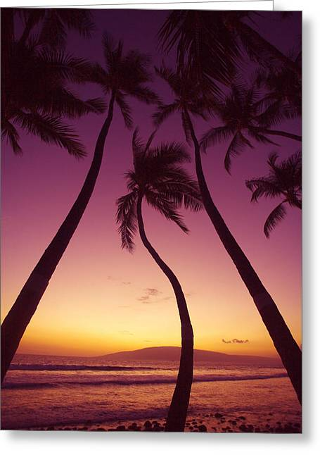Lahaina Greeting Cards - Maui Palms Greeting Card by Ron Dahlquist - Printscapes