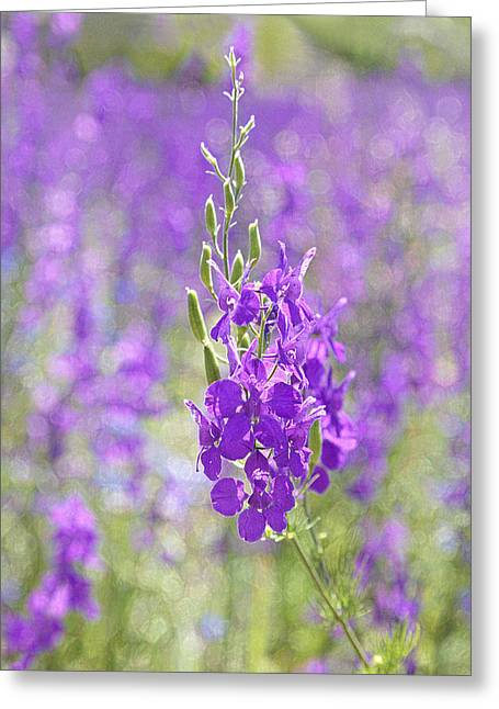 Close Focus Nature Scene Greeting Cards - Meadow of Violets  Greeting Card by Kantilal Patel