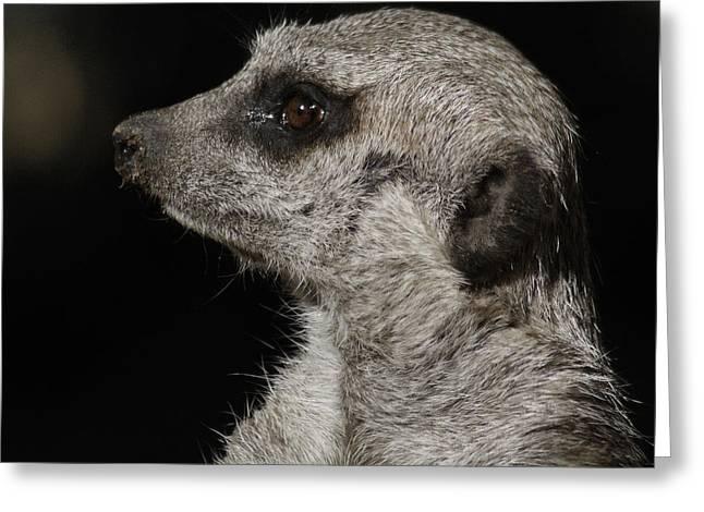Meerkat Photographs Greeting Cards - Meerkat Profile Greeting Card by Ernie Echols