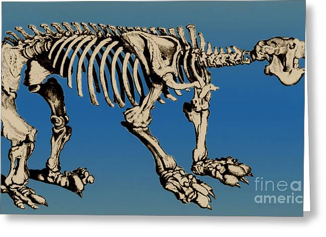 Fossil Art Greeting Cards - Megatherium Extinct Ground Sloth Greeting Card by Science Source
