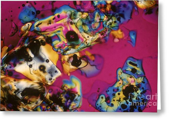 Transmitted Light Micrograph Greeting Cards - Melting Ice Greeting Card by Michael W. Davidson