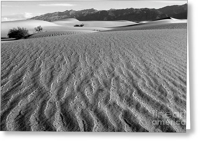 Mountains Of Sand Greeting Cards - Mesquite Dunes 15 Greeting Card by Bob Christopher