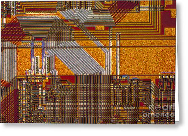 Transmitted Light Micrograph Greeting Cards - Microprocessors Greeting Card by Michael W. Davidson