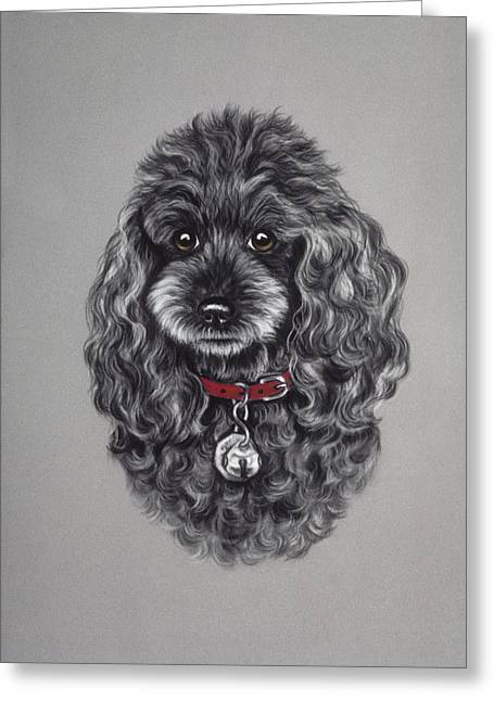 Curly Hair Pastels Greeting Cards - Miniature Poodle Greeting Card by Patricia Ivy