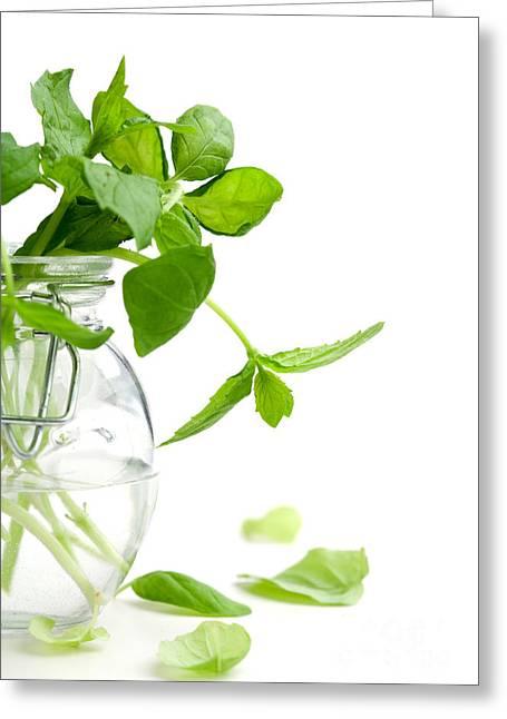 Foliage Fragrance Greeting Cards - Mint Greeting Card by Kati Molin