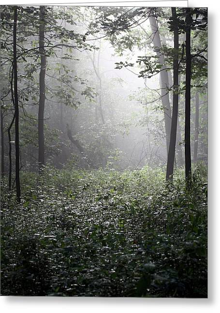 Misty Morning Greeting Card by Rick Rauzi