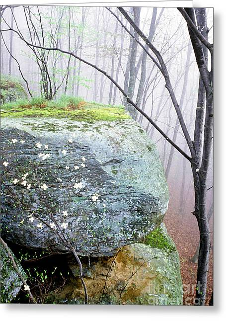 Dogwood Lake Greeting Cards - Misty Spring Morning Greeting Card by Thomas R Fletcher
