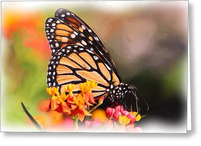 Monarch And Milkweed Greeting Card by Heidi Smith