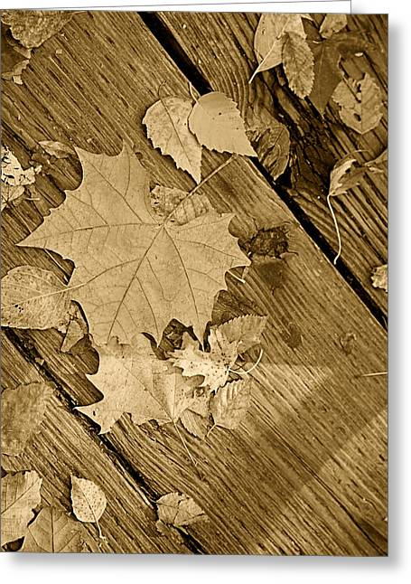 Fallen Leaf Greeting Cards - Monochrome Antique Leaf Greeting Card by M K  Miller