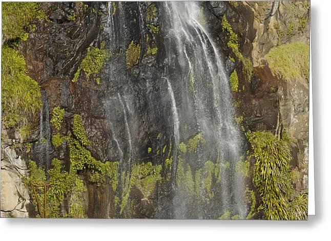 Moran Greeting Cards - Moran Falls, Lamington National Park Greeting Card by Tim Laman