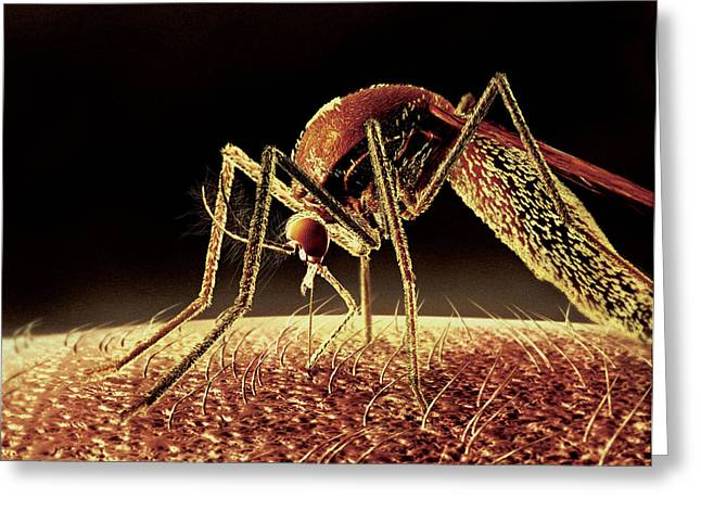 Vector Image Greeting Cards - Mosquito Sucking Blood, Computer Artwork Greeting Card by Ian Cuming