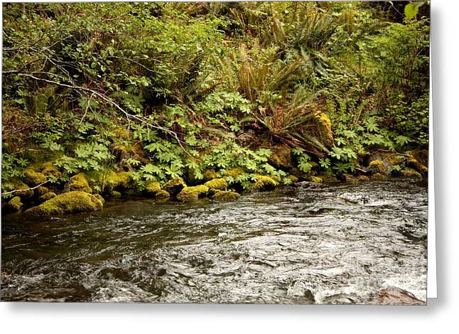 Moss Green Greeting Cards - Mossy Riverbank Greeting Card by Carol Groenen