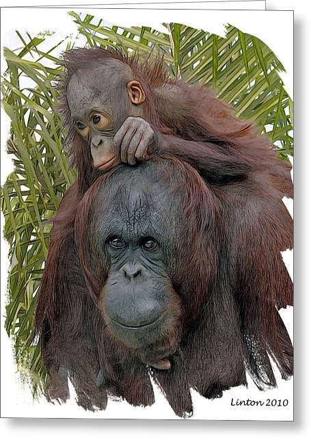 Orangutan Digital Art Greeting Cards - Mother And Child Greeting Card by Larry Linton