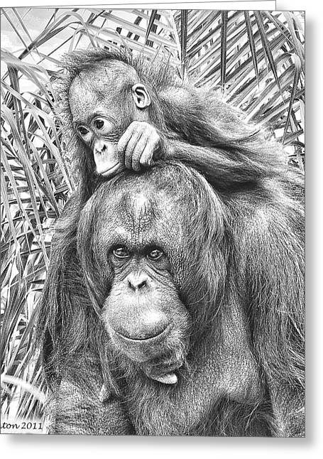 Orangutan Digital Art Greeting Cards - Mother And Daughter Greeting Card by Larry Linton