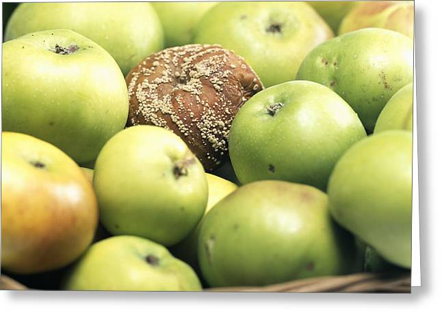 Mouldy Greeting Cards - Mouldy Apple Greeting Card by Sheila Terry