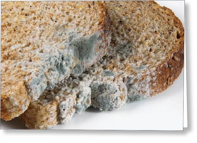 Mouldy Greeting Cards - Mouldy Bread Greeting Card by Cordelia Molloy