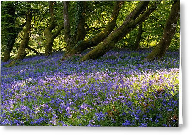 Forest Floor Greeting Cards - Mount Congreve Gardens County Waterford Greeting Card by Peter Zoeller
