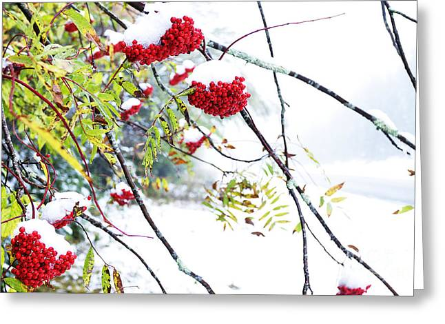 West Virginia Snow Scene Greeting Cards - Mountain Ash and Snow Greeting Card by Thomas R Fletcher