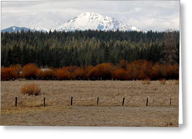Mountain Meadow Greeting Card by Lydia Warner Miller