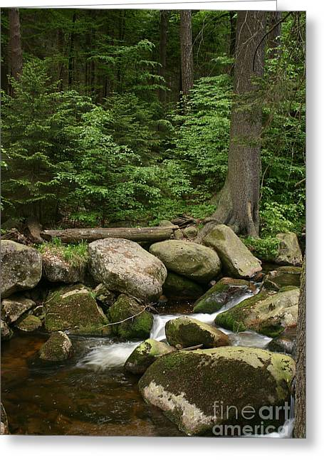 Stream Pyrography Greeting Cards - Mountain stream Greeting Card by Torsten Dietrich