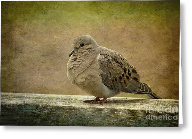 Mourning Dove Greeting Cards - Mourning Dove Greeting Card by Cindi Ressler