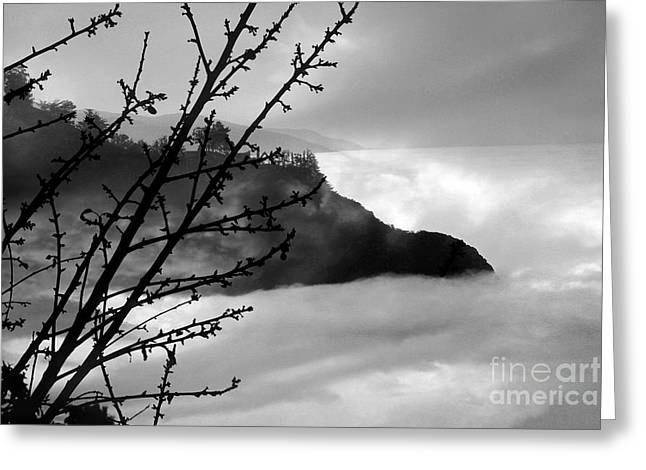 Big Sur California Greeting Cards - Mourning her loss Greeting Card by Ellen Cotton