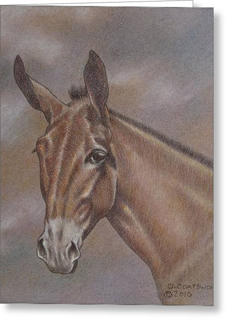 Dorothy Coatsworth Greeting Cards - Mule Head Greeting Card by Dorothy Coatsworth