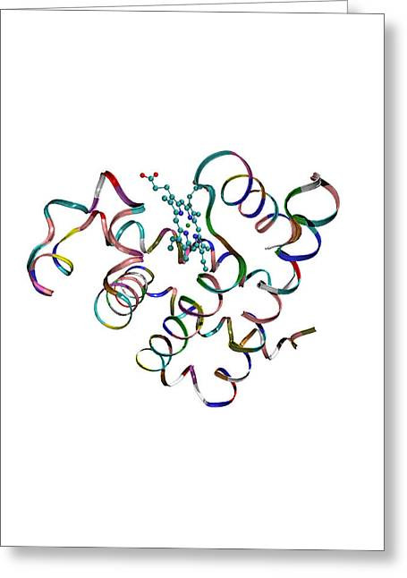 Oxygen Transport Greeting Cards - Myoglobin Protein Greeting Card by Dr Tim Evans