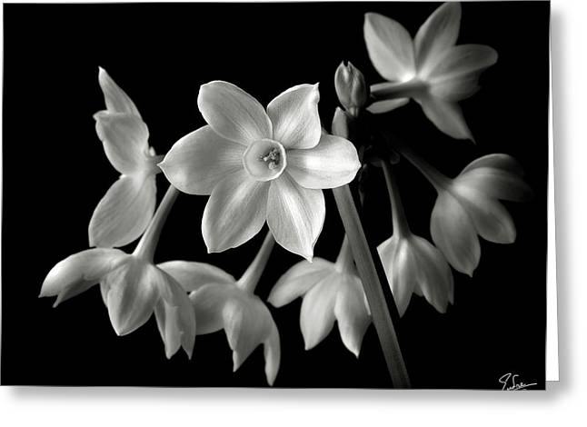 Flower Photos Greeting Cards - Narcissus in Black and White Greeting Card by Endre Balogh
