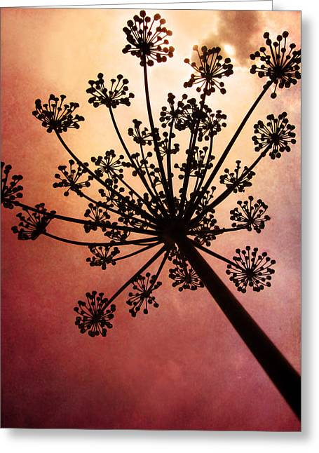 Flesh Tones Greeting Cards - Natures Fireworks Greeting Card by Amy Tyler