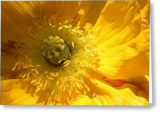 Natures Wonder Greeting Card by Bruce Bley